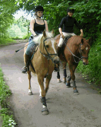 Horse Traffic in Rosemary Lane Freshford Somerset